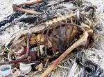 dead_bird_plastics