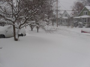 My front yard and part of Linda's SUV.